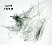 down feathers illustration