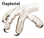 raptorial claw foot