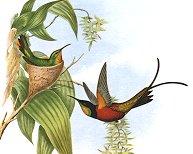 hummingbird facts painting