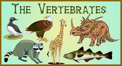 Phylum Chordata Animals List The Vertebrates (Subph...