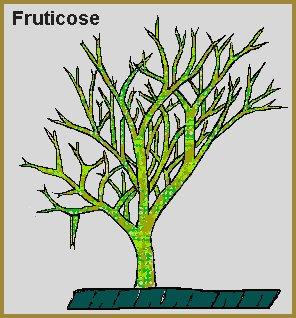 fruticose image