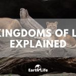 The 7 Kingdoms of Life Explained: Which Are Eukaryotic & Prokaryotic?
