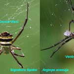 Spider Anatomy 101: A Look At The Different Parts Of A Spider