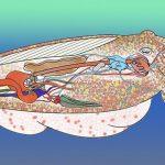 Cuttlefish Anatomy 101: A Look Inside