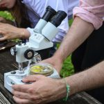 Best Stereo Microscopes for Studying Insects & More