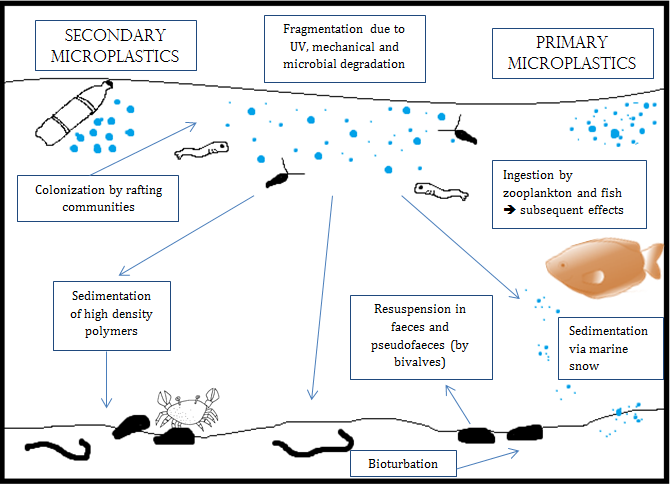 primary microplastics vs secondary microplastics