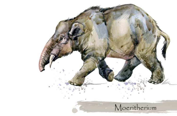 Moeritherium early elephant