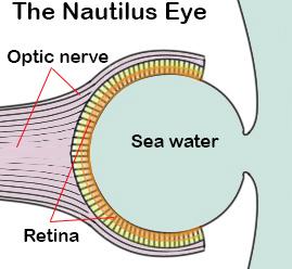 nautilus eye diagram