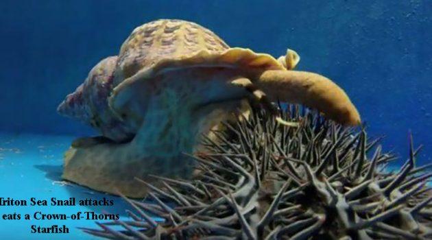 gastropod anatomy header image