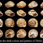 The Gastropod Shell: Nature's Mobile Homes