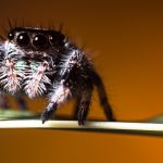 Arachnids: The Extremely Diverse, 8-Legged Wonders Of The World