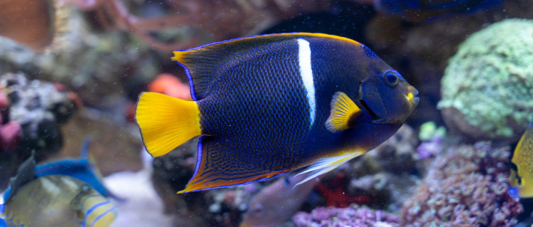 angler fish memory
