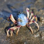 Arthropods: The Incredible Diversity of Phylum Arthropoda
