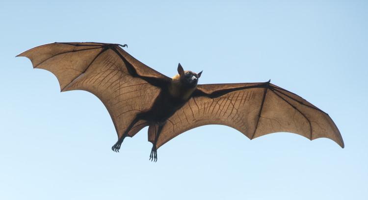 bat flying through sky