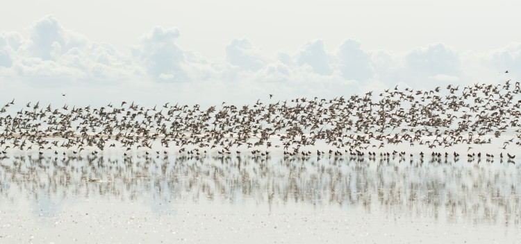 Wader birds migrating south