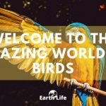 Bird Facts: The Smallest, Largest, Rarest & Most Acrobatic In The World