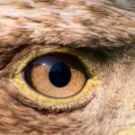 Bird Eyes: Exactly How Does A Bird's Vision Work?
