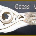 Bird Anatomy: Complete Guide - Including Feet, Skeleton & Wings