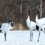 15 Crane Species Examined: The Most Amazing Birds On The Planet