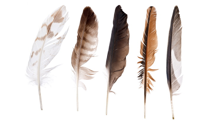 bird feather collection