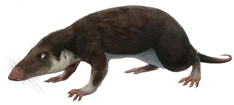 first mammal morganucodon watsoni