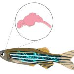 Fish Nervous System: How The Brain & Nerves Work