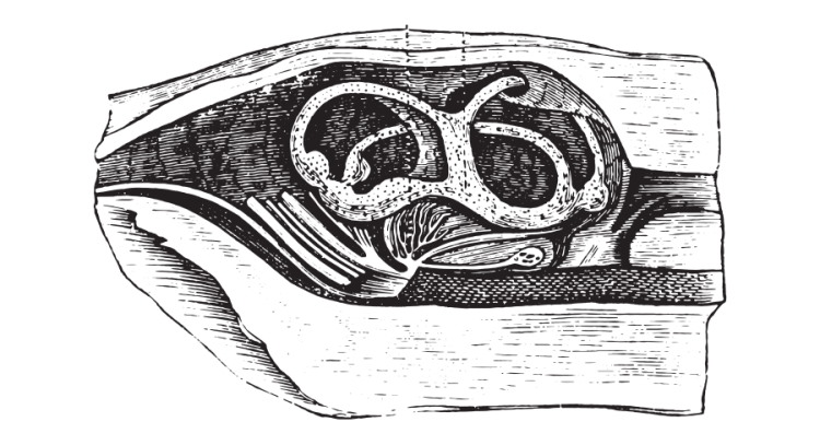 fish ear engraving