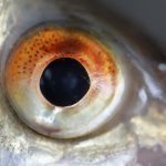 Fish Eyes 101: Their Sight & Vision Compared To Humans