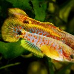 Gender Change In Fish: Protandrous & Protogynous Explained