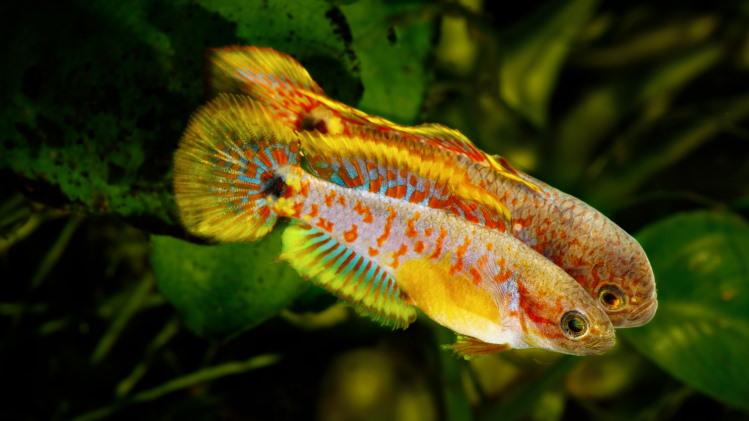 transgender fish change