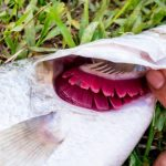 Gills 101: The Magic Of How Fish Breath - Explained