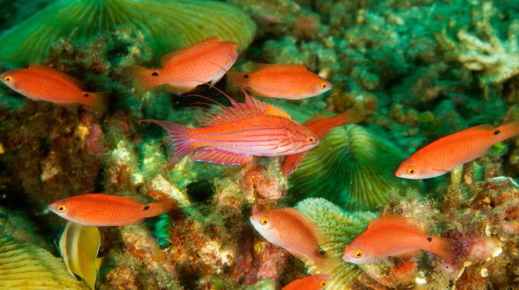 fish polygyny