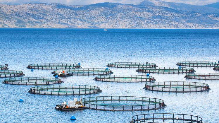 gmo fish farm feature