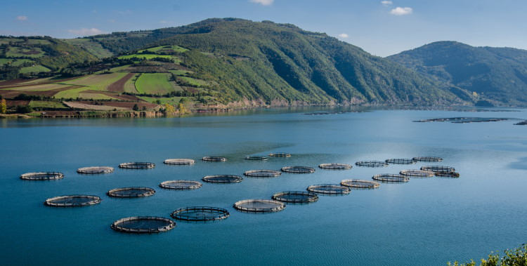 genetic modifications in fish farming