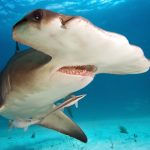 """Predatory Fish: From Their Jaws, To The Strategy Of """"Shoaling"""""""