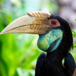 Hornbills: The Wonderful World of Bucerotiformes
