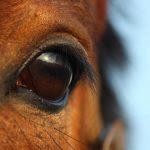 The Mammalian Eye: Vision & Sight In Mammals