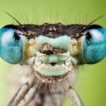 The Insect Head: Guide To The Antennae, Eyes & Mouthparts
