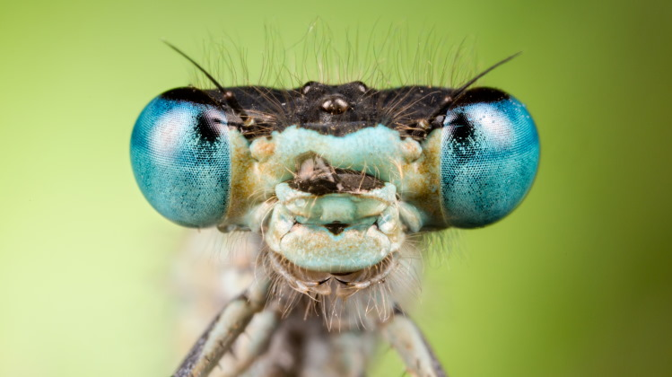 insect head close up