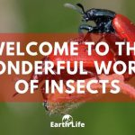 Insects: The Most Successful Lifeform On The Planet