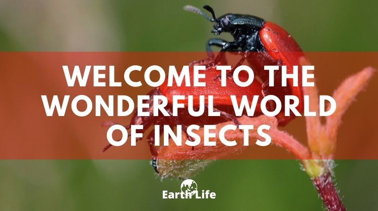 insects are wonderful