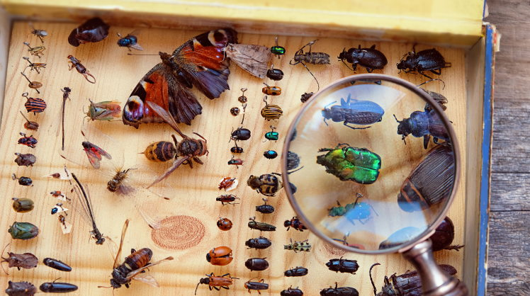 entomology clubs and societies