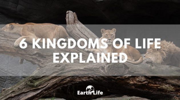 kingdoms of life explained