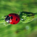 Coccinellidae: The Curious Larvae & Life Cycle Of The Lady Bug