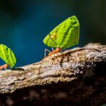 Leaf Cutter Ants 101: The Lovable Little Fungus Farmers