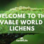 Lichen: The Lovable & Unique Symbiosis Of Nature