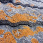 Lichens and Air Pollution: Nature's Bioindicator Of Air Quality