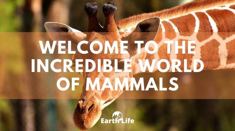 mammal characteristics banner