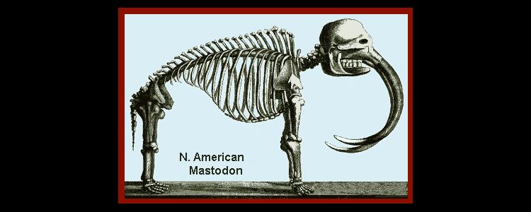 mammal skeleton mastodon