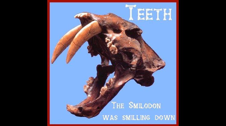 mammal teeth in smilodon